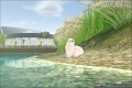 艾明馬夏的白海狗