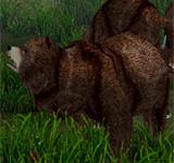 巨大棕熊 怪物永久連結