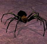 (困難)毒黑蜘蛛 怪物永久連結