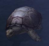 烏龜 怪物永久連結