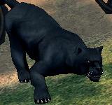 黑豹 怪物永久連結
