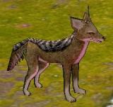 豺狼 怪物永久連結