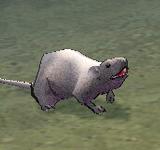 灰鼠 怪物永久連結