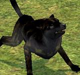 粗暴的野狗(黑) 怪物永久連結
