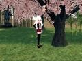 聽說在櫻花樹下好像會立某個旗