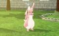 胖胖的兔子